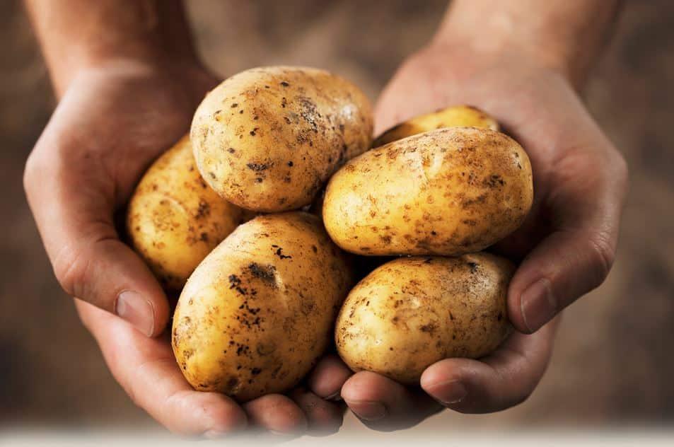 patates psygeio