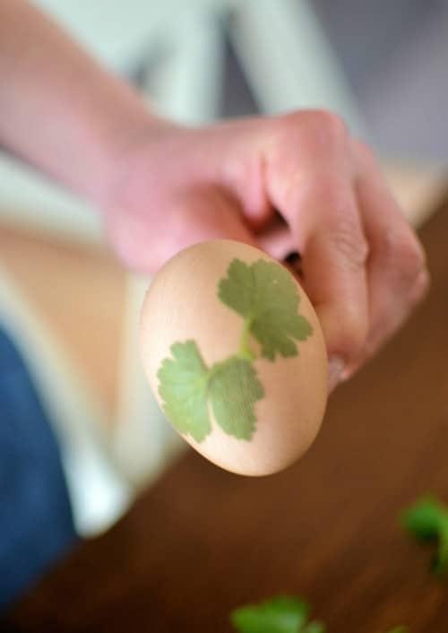 Πώς να βάψετε πασχαλινά αυγά με φύλλα κρεμμυδιού